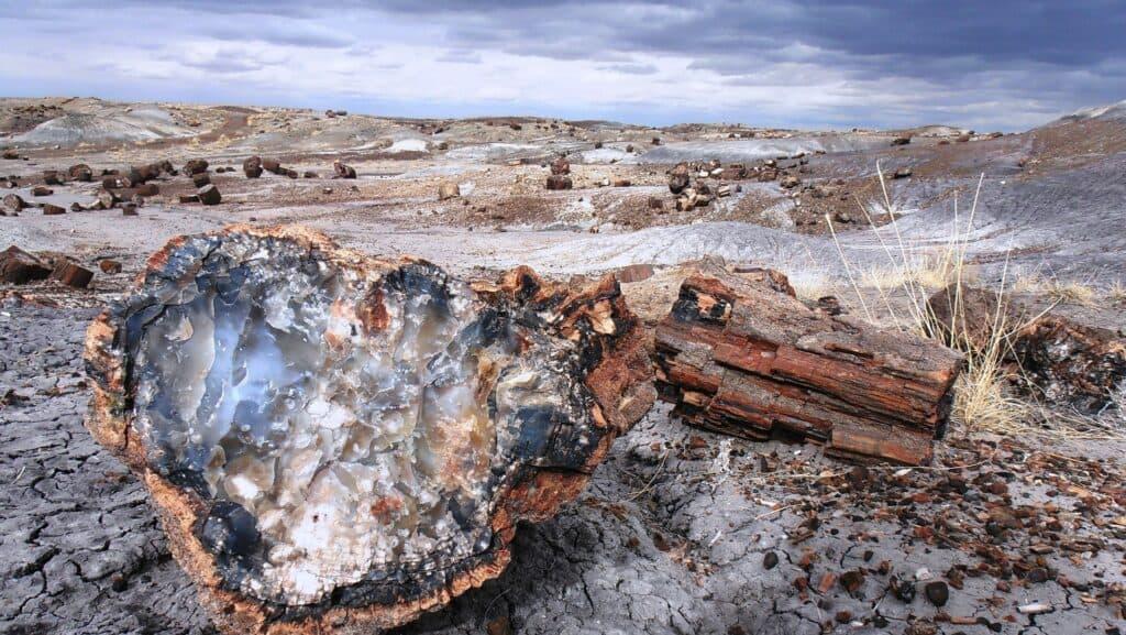 Petrified Fossils Rockhounding