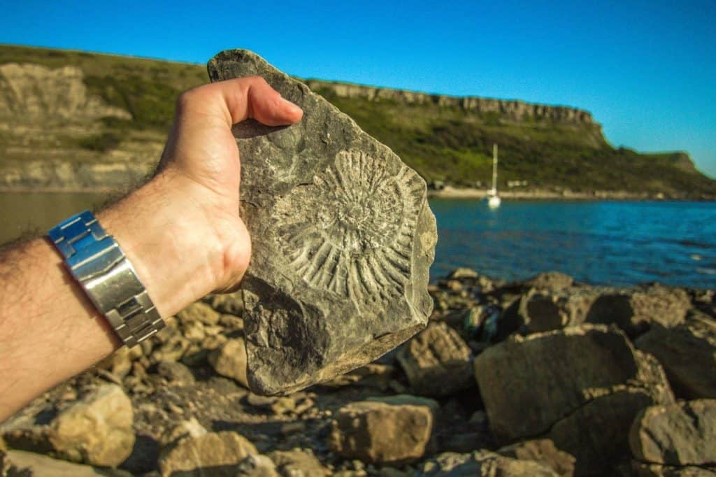 Why Are Fossils Found in Sedimentary rocks?