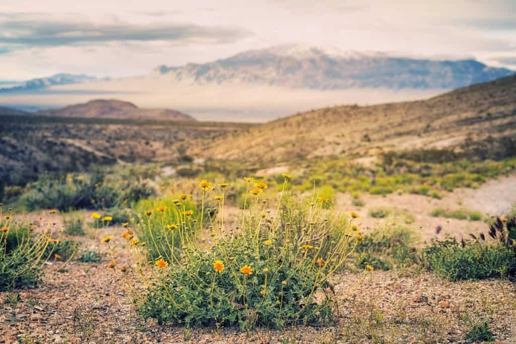 Best Rockhounding Locations in Nevada